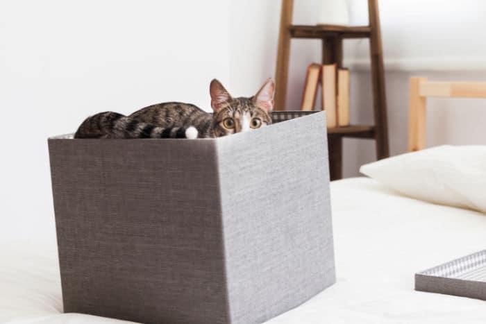 chat de Schrödinger et stratégie marketing